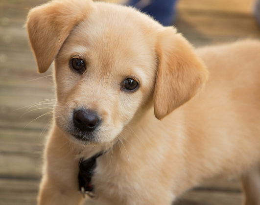 How to Find the Perfect Puppy for You
