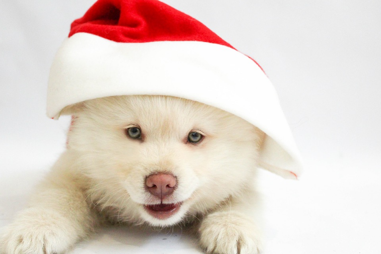 Puppies: The Perfect Holiday Present