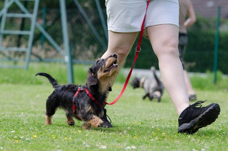 Tips For Training Your New Puppy