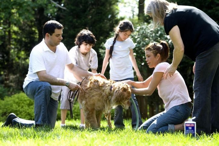 Top Reasons Your Family Needs a Dog