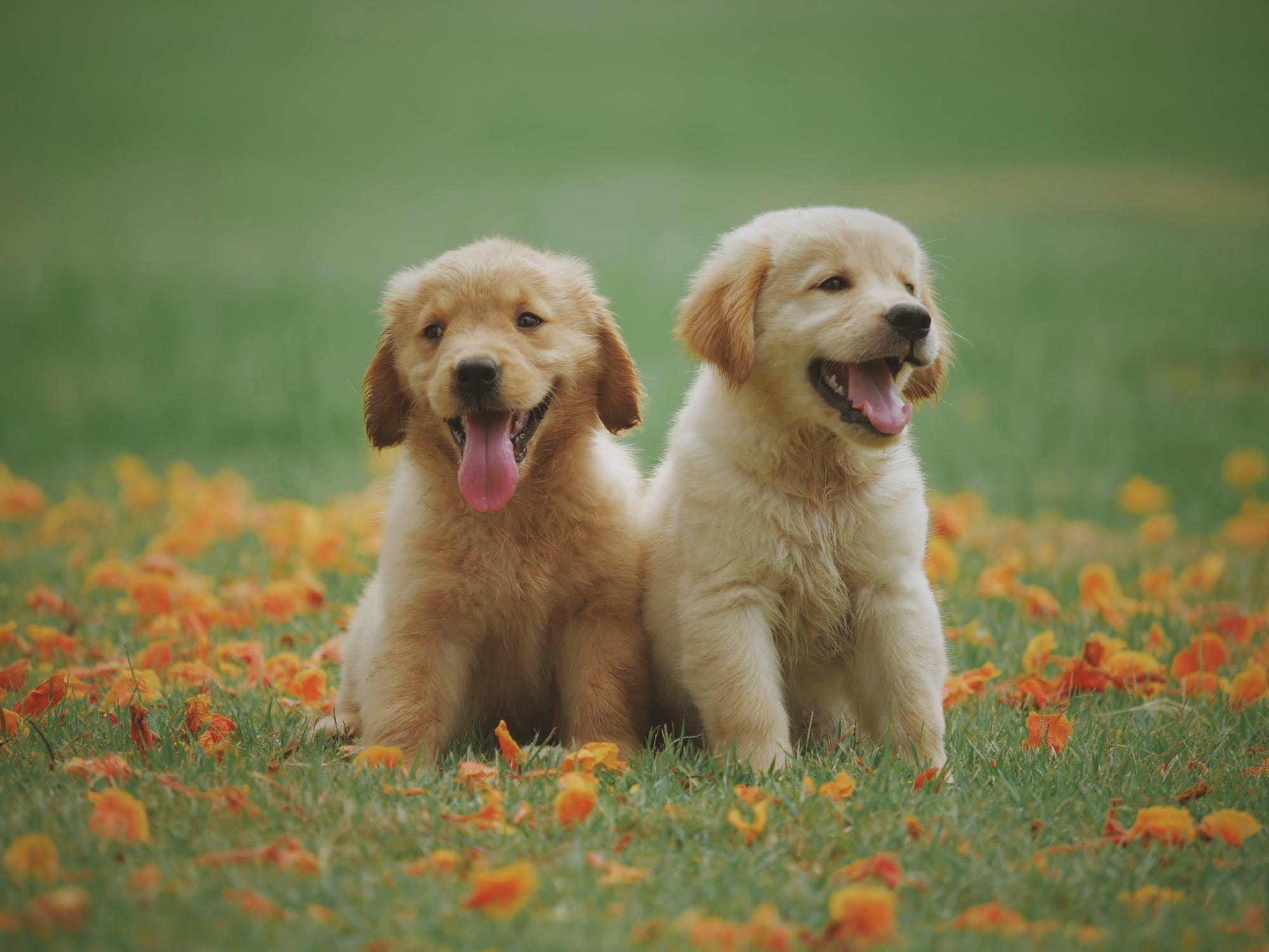 The Science Behind Puppy Love