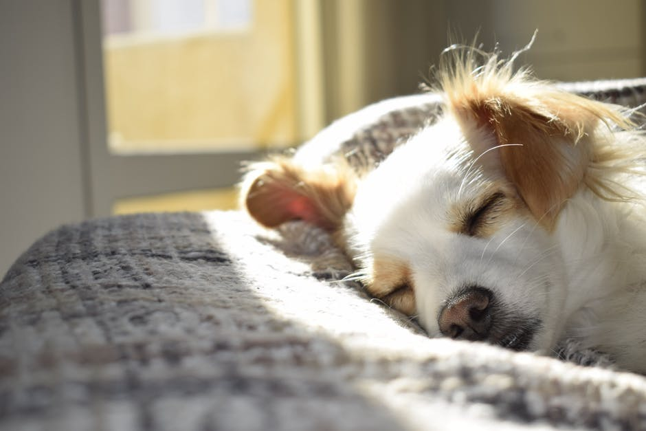 How Long Can You Leave Your Puppy Home-Alone?