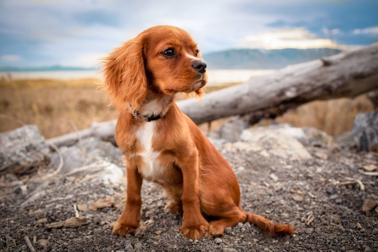 Improve Your Puppy's Life