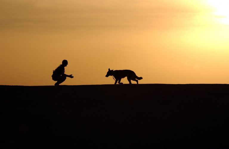 3 Things Owning a Dog Teaches You