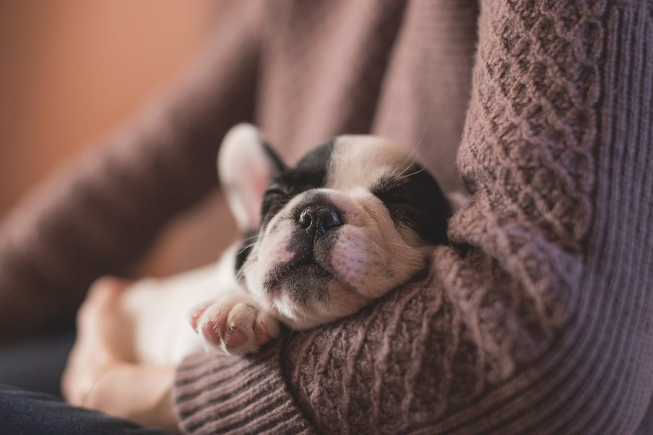 Benefits of Using a Playpen For Your Puppy