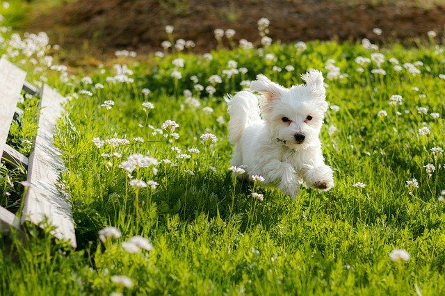 Popular Hypoallergenic Dog Breeds