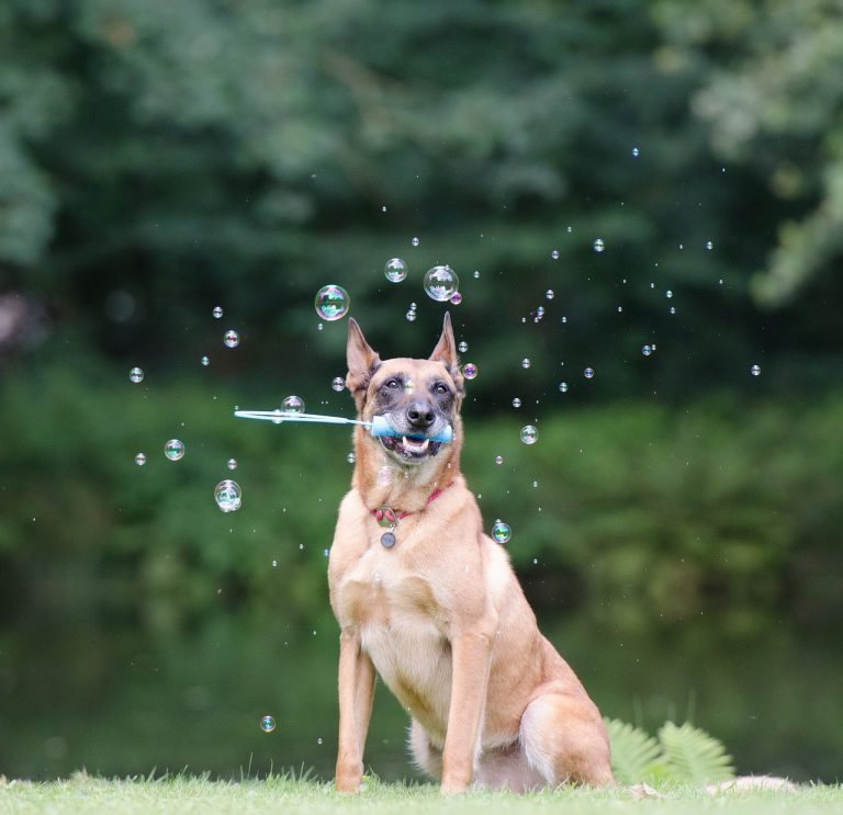 Most Useful Tricks to Teach Your Puppy