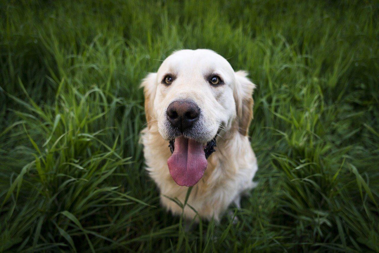 Top 5 Friendliest Dog Breeds
